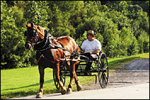 Vehicles don't account for all the horsepower on Highway 79.